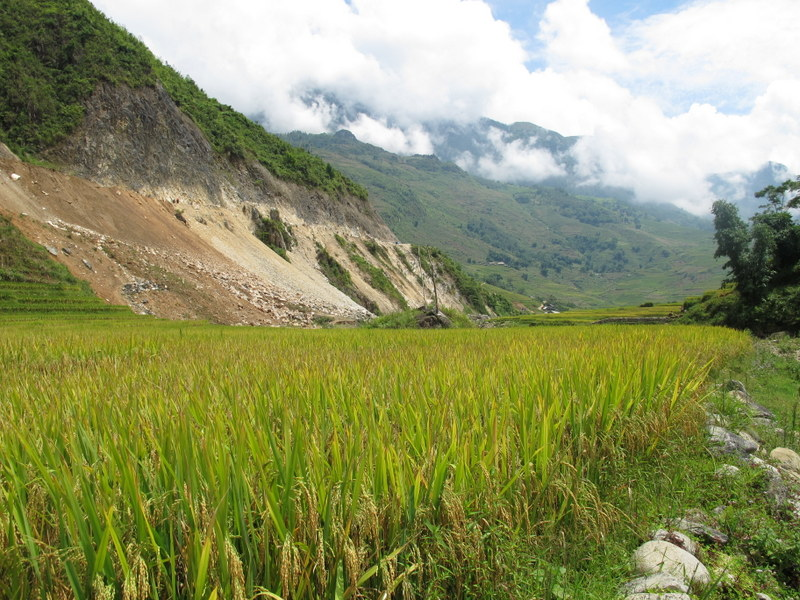 Rice fields on the valley floor.