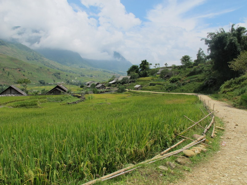rice fields and vilalge Sa Pa Vietnam