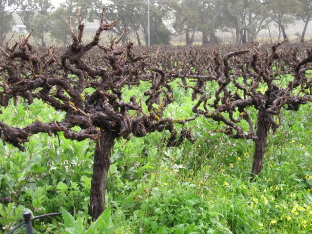 Sculpted vineyards and twisted vines.