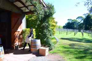 Witches Falls Winery, Tamborine