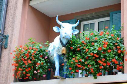 Swiss Moo Cow