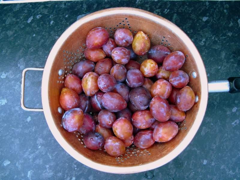 Damsen plums